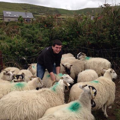 Student with flock of sheep.jpg